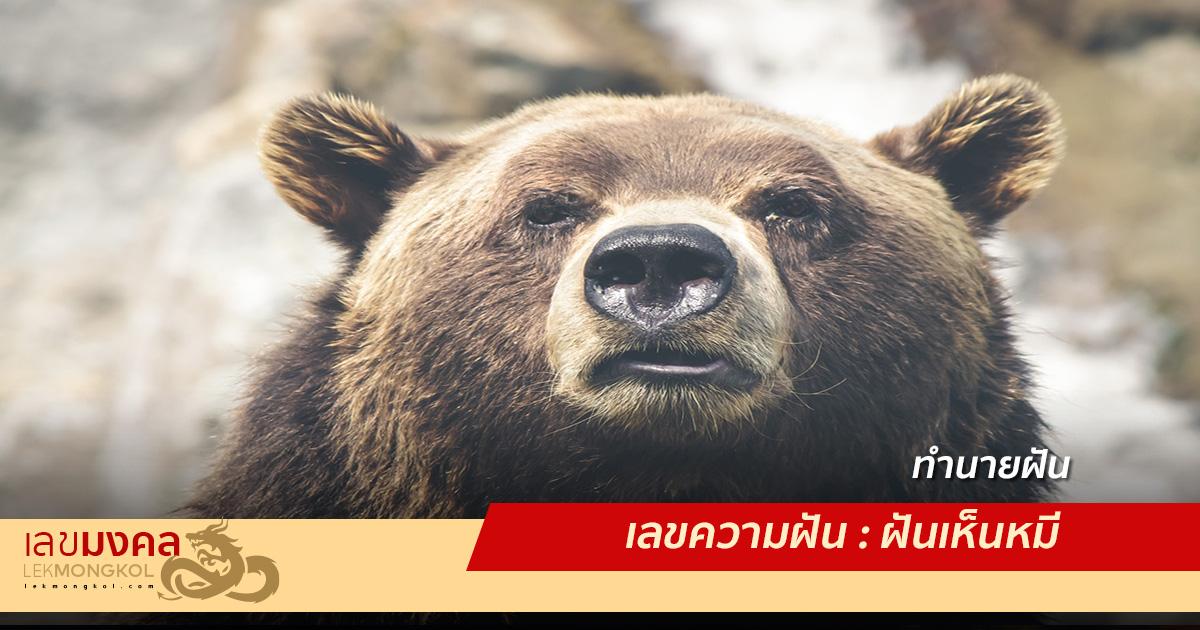 เลขความฝัน : ฝันเห็นหมี