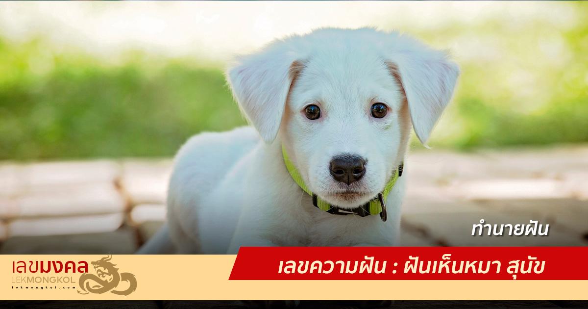 เลขความฝัน : ฝันเห็นหมา สุนัข